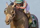 No Belmont Stakes for Conquest Curlinate