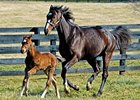 Name of Rachel's Foal to Be Revealed at Spa