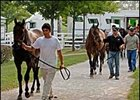 Keeneland September Yearling Sale Should Shed Light on Market