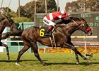 No Rust for Acclamation in Whittingham Return