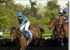 Nine to Contest New York Turf Writers Cup