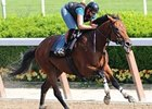 Big Brown in Sharp Work for Haskell