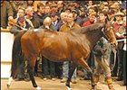 Magical Romance Brings World Record Price at Tattersalls Sale