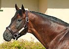 Ascot Knight Pensioned