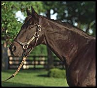 Seattle Slew Returns to Three Chimneys
