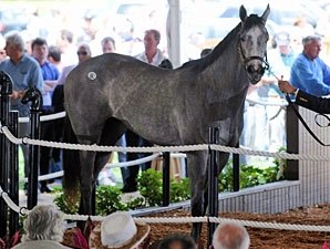 Tapit Filly Commands $750,000 at F-T Sale