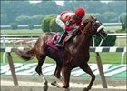 Corinthian to Stand at Gainesway