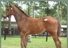Sunday Silence Colt Brings Nearly $2.8 Million In Japan