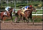 Hollywood Park Report: Queen of the West