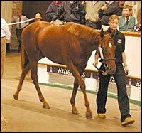 Significant Upswing for Tattersalls Houghton Sale