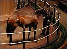 Lion Heart Yearlings Top Opening Session of Fasig-Tipton Sale
