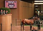 Smart Strike Filly Brings $550,000
