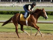 New Derby Contender Bwana Bull Works at Churchill