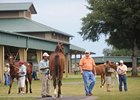 OBS Yearling Sale Has 772 Horses in Catalog