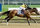 Eve Giselle Triumphs in Endine Stakes