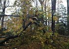 Hurricane Sandy Impacts Northeast Tracks