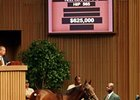 $625,000 Bernardini Colt at Keeneland Sale