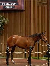 Mineshaft Filly Brings $1.75 Million at Keeneland April
