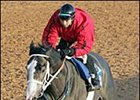 Rockport Harbor, Afleet Alex, Consolidator Work at Oaklawn Park