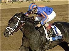 The Great Bandini Emerges in Blue Grass