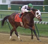 Champion Surfside Retired; Might be Going to Unbridled