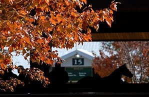 Keeneland Sale Hits Bump on Day 10