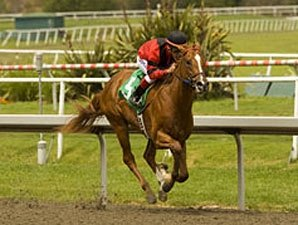 Colt Could be Long Gone in Prevue Stakes