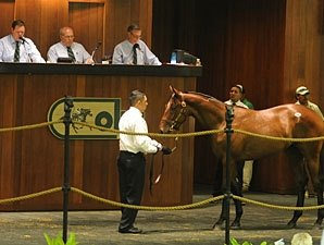 OBS August Yearling Sale Finishes Positively