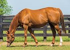 Kentucky-Bred Champion Nominees Announced