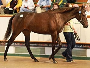 Tattersalls Book One Bullish at the Start