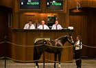 Tiznow Colt Brings $475,000 at OBS Sale