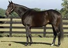 Sabre d'Argent to Bridlewood in Florida