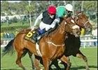 Grade I Winner Dress To Thrill Retired