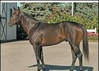 Leading Freshman Sire 2004: Successful Appeal