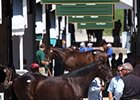 Keeneland Adjusts Sale Conditions on Steroids