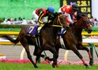 Buena Vista Loses in Japan's Filly Crown Bid