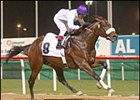 Victory Moon Wins and Other Dubai Racing Action