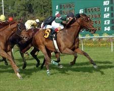 Hotstufanthensome Sizzles in Tampa BC Stakes