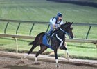 Rachel Alexandra Works Under Lights