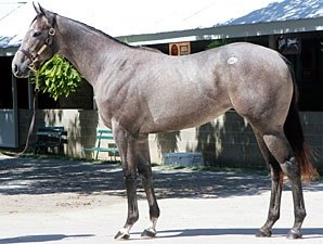 $1.3 Million Unbridled's Song Filly to Leon