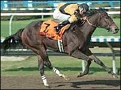 Hallowed Dreams Retired; To Be Bred to Unbridled's Song