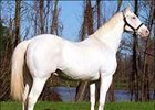 White Thoroughbred Grand Espoir Blanc Dead