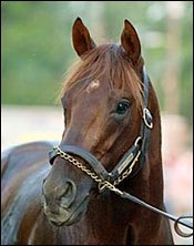 Go Smarty Go -- To Stud at Three Chimneys Farm
