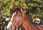 Unbridled Returns to Claiborne Farm