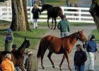 Bloodstock & Markets - Commercially Speaking