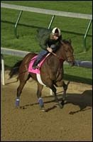 Flute, Frankel's 'Sweetheart,' Takes Aim at Kentucky Oaks