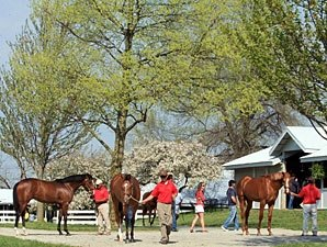 Keeneland Sale: These Juveniles Could Shine