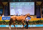 Amanpour Brings $1.5M on Final MM Select Day
