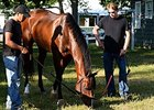 Travers Hopeful Tale of Verve Drills at Spa