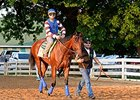 American Pharoah Strong in Return to Track